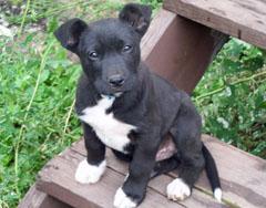 Wisconsin puppy