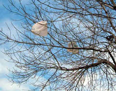 Bags in tree