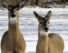 deer08.jpg
