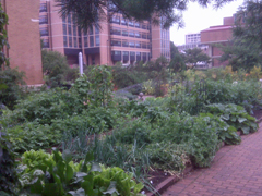 UW Madison kitchen garden. IMAGE: Bob Hague