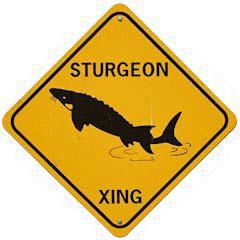 SturgeonB