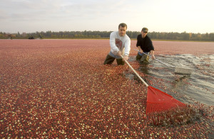 (PHOTO: Wisconsin State Cranberry Growers Association)