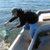 Walleye fingerlings being released in Lake Shawano (Photo: WDNR)