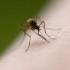 Wisconsin DHS epidemiologist addresses Zika virus concerns