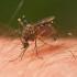 Mosquito season is under way