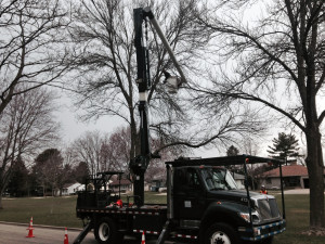 Ash tree removal in Madison PHOTO WRN