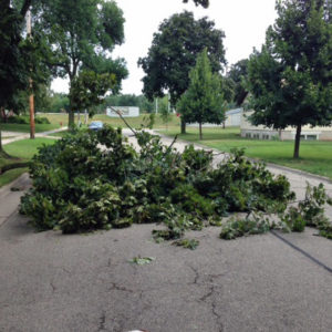 Downed limb in Madison street WRN photo