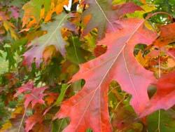 Wisconsin's fall foliage (photo: Jackie Johnson)