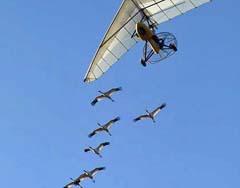 Wisconsin whooping cranes
