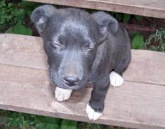 Proposed legislation would regulate dog breeders in Wisconsin