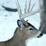 Safety is key in Wisconsin's deer hunt