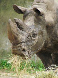 George photo Henry Vilas Zoo
